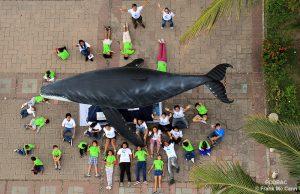 ecobac-ecologia-y-conservacion-de-ballenas-puerto-vallarta-03