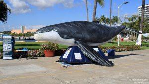 ecobac-ecologia-y-conservacion-de-ballenas-puerto-vallarta-17