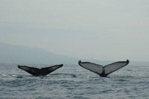 ecobac-ecologia-y-conservacion-de-ballenas-puerto-vallarta-galeria-01