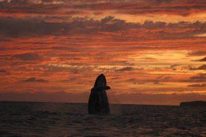 ecobac-ecologia-y-conservacion-de-ballenas-puerto-vallarta-galeria-04