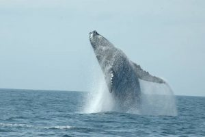ecobac-ecologia-y-conservacion-de-ballenas-puerto-vallarta-galeria-08