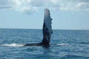 ecobac-ecologia-y-conservacion-de-ballenas-puerto-vallarta-galeria-11