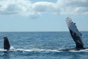 ecobac-ecologia-y-conservacion-de-ballenas-puerto-vallarta-galeria-12