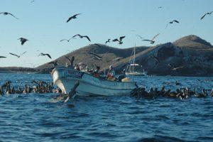 ecobac-ecologia-y-conservacion-de-ballenas-puerto-vallarta-galeria-14