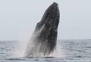 ecobac-ecologia-y-conservacion-de-ballenas-puerto-vallarta-galeria-21