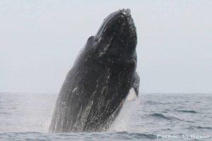 ecobac-ecologia-y-conservacion-de-ballenas-puerto-vallarta-galeria-22