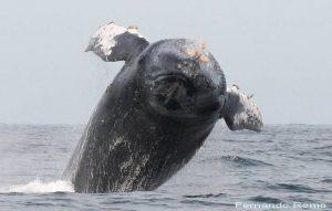 ecobac-ecologia-y-conservacion-de-ballenas-puerto-vallarta-galeria-23