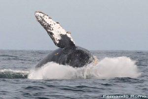 ecobac-ecologia-y-conservacion-de-ballenas-puerto-vallarta-galeria-24