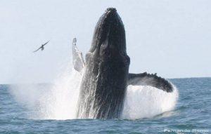 ecobac-ecologia-y-conservacion-de-ballenas-puerto-vallarta-galeria-25