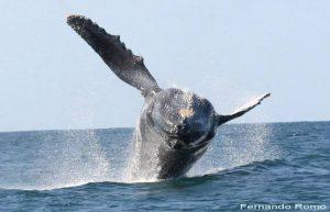ecobac-ecologia-y-conservacion-de-ballenas-puerto-vallarta-galeria-27
