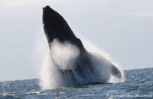 ecobac-ecologia-y-conservacion-de-ballenas-puerto-vallarta-galeria-28
