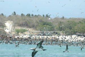 ecobac-ecologia-y-conservacion-de-ballenas-puerto-vallarta-galeria-33