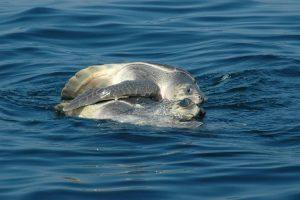 ecobac-ecologia-y-conservacion-de-ballenas-puerto-vallarta-galeria-38