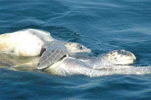 ecobac-ecologia-y-conservacion-de-ballenas-puerto-vallarta-galeria-39