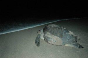 ecobac-ecologia-y-conservacion-de-ballenas-puerto-vallarta-galeria-40