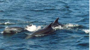 ecobac-ecologia-y-conservacion-de-ballenas-puerto-vallarta-galeria-45