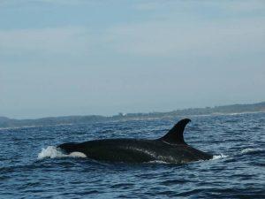 ecobac-ecologia-y-conservacion-de-ballenas-puerto-vallarta-galeria-47