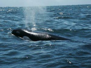 ecobac-ecologia-y-conservacion-de-ballenas-puerto-vallarta-galeria-49