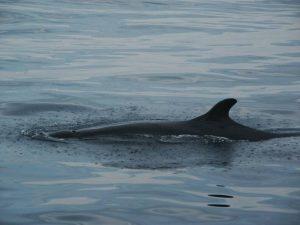 ecobac-ecologia-y-conservacion-de-ballenas-puerto-vallarta-galeria-50