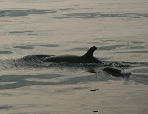 ecobac-ecologia-y-conservacion-de-ballenas-puerto-vallarta-galeria-51