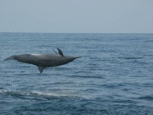 ecobac-ecologia-y-conservacion-de-ballenas-puerto-vallarta-galeria-53