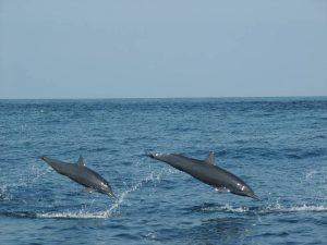 ecobac-ecologia-y-conservacion-de-ballenas-puerto-vallarta-galeria-54