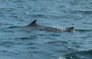 ecobac-ecologia-y-conservacion-de-ballenas-puerto-vallarta-galeria-55
