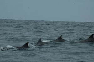 ecobac-ecologia-y-conservacion-de-ballenas-puerto-vallarta-galeria-56