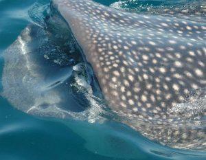 ecobac-ecologia-y-conservacion-de-ballenas-puerto-vallarta-galeria-57
